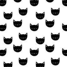 kitties - kimsa